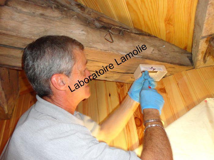 Laboratoire lamolie traitements termites d ratisation d sinfection d sinsectisation bordeaux - Ver de bois ou termite ...