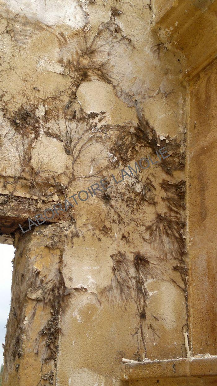 blattes des bois ver de bois ou termite. Black Bedroom Furniture Sets. Home Design Ideas